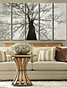 Reproduction transferee sur toile Art botanique Old Tree Set de 5