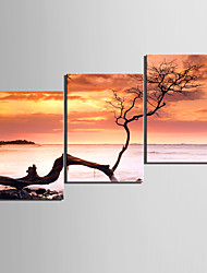 cheap -Stretched Canvas Print Canvas Set Floral/Botanical Modern, Three Panels Canvas Horizontal Print Wall Decor Home Decoration