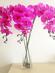 Пью Emulational бабочки орхидеи