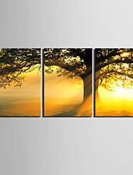 cheap -E-HOME® Stretched Canvas Art Sunset Under The Tree Decorative Painting Set of 3