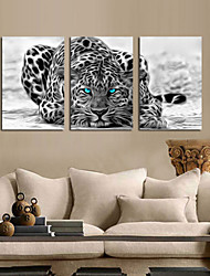 VISUAL STAR®Abstract Animal Stretched Canvas Print Group Wall Art Ready to Hang