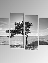 cheap -VISUAL STAR®Modern Home Decor Artwork Tree Stand on Desert Canvas Print Ready to Hang
