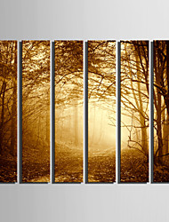 E-HOME® Stretched Canvas Art Woods In The Mist Decoration Painting  Set Of 6