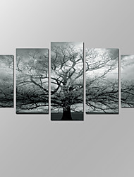 VISUAL STAR®Black and White Running Horses Picture Giclee Artwork 5 Panels Modern Home Wall Decoration Framed Canvas Print Ready to Hang