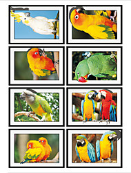 cheap -Parrot Photo Frame Drawing  PVC  Decorative Skin Wall Stickers for The Office Or Living Room