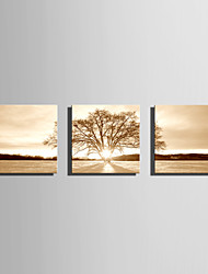 Landscape Floral/Botanical Modern Classic,Three Panels Canvas Horizontal Print Wall Decor For Home Decoration