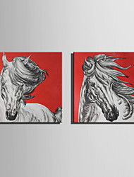 E-HOME Stretched Canvas Art Portrait Of  White Horses Decoration Painting Set Of 2