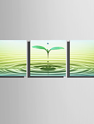 cheap -Stretched Canvas Print Art Botanical Sprout Set of 3