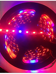 cheap -5M LED Grow Lights 3Red & 1Blue Growing SMD5050 IP20 LED Strip Plant Growth Light DC12V