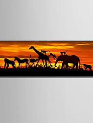 Недорогие -Животные Иллюстрации Предметы искусства, Пластик материал с рамкой For Украшение дома Предметы искусства в рамках Гостиная