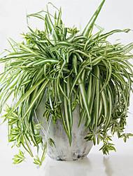 お買い得  -人工花 1 田園 スタイル 植物 ウォールフラワー