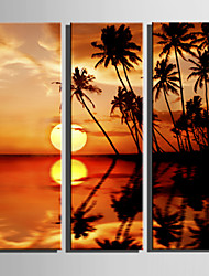 Недорогие -С картинкой Роликовые холсты Отпечатки на холсте - Пейзаж ботанический Modern 3 панели