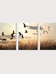 Недорогие -С картинкой Отпечатки на холсте - Пейзаж Фото Modern