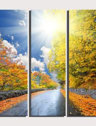 Недорогие -С картинкой Роликовые холсты Отпечатки на холсте - Пейзаж ботанический Modern