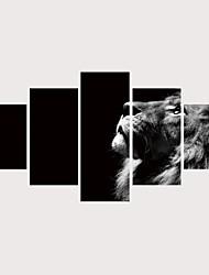 tanie -Nadruk Zwijane wydruki na płótnie Wydruki na rozciągniętym płótnie - Zwierzęta Koty Nowoczesne Nowoczesny Pięć paneli