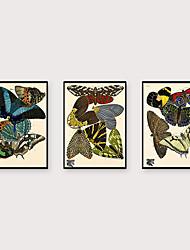 abordables -Art Imprimé encadré Set de Cadres - Animaux Polystyrène Illustration Art mural