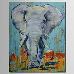 iarts®hand festett olajfestmény állat elefánt feszített keret