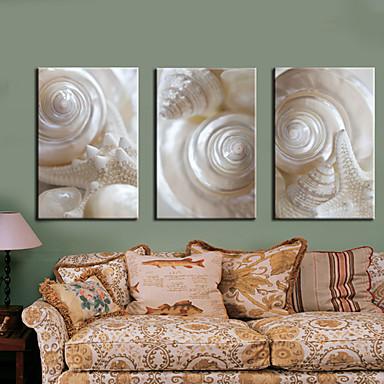 Pânză întinsă Print Art Natură moartă albă Conch Set de 3