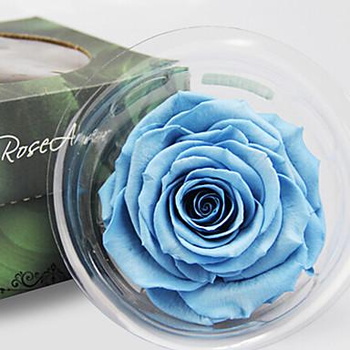 roser bevart friske blomster flerfarget valgfri 1pc / sett
