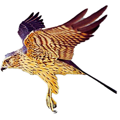 Quebra-Cabeças 3D Maquetes de Papel Artesanato de Papel Brinquedos de Montar Pássaro Eagle Animais Simulação Faça Você Mesmo Cartão de