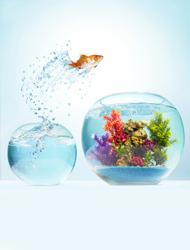 Tilbehør til fisk og akvariu...